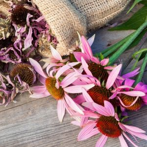 Противовирусные травы при простуде и гриппе