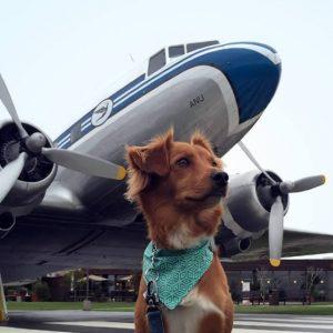 В самолет вместе с питомцем. S7 допускает перевозки животных в соседнем кресле