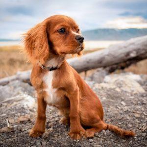Что делать, если потерялась собака? Как отыскать домашнего питомца