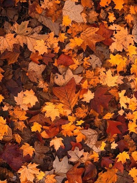 Для некоторых осенью откроются новые горизонты
