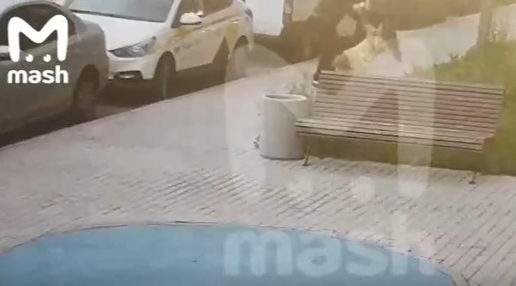 Потасовку сняла камера наблюдения