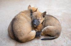 Безруков, Слепаков и Козловский требуют наказать приют в Волгограде, где нашли мертвых собак